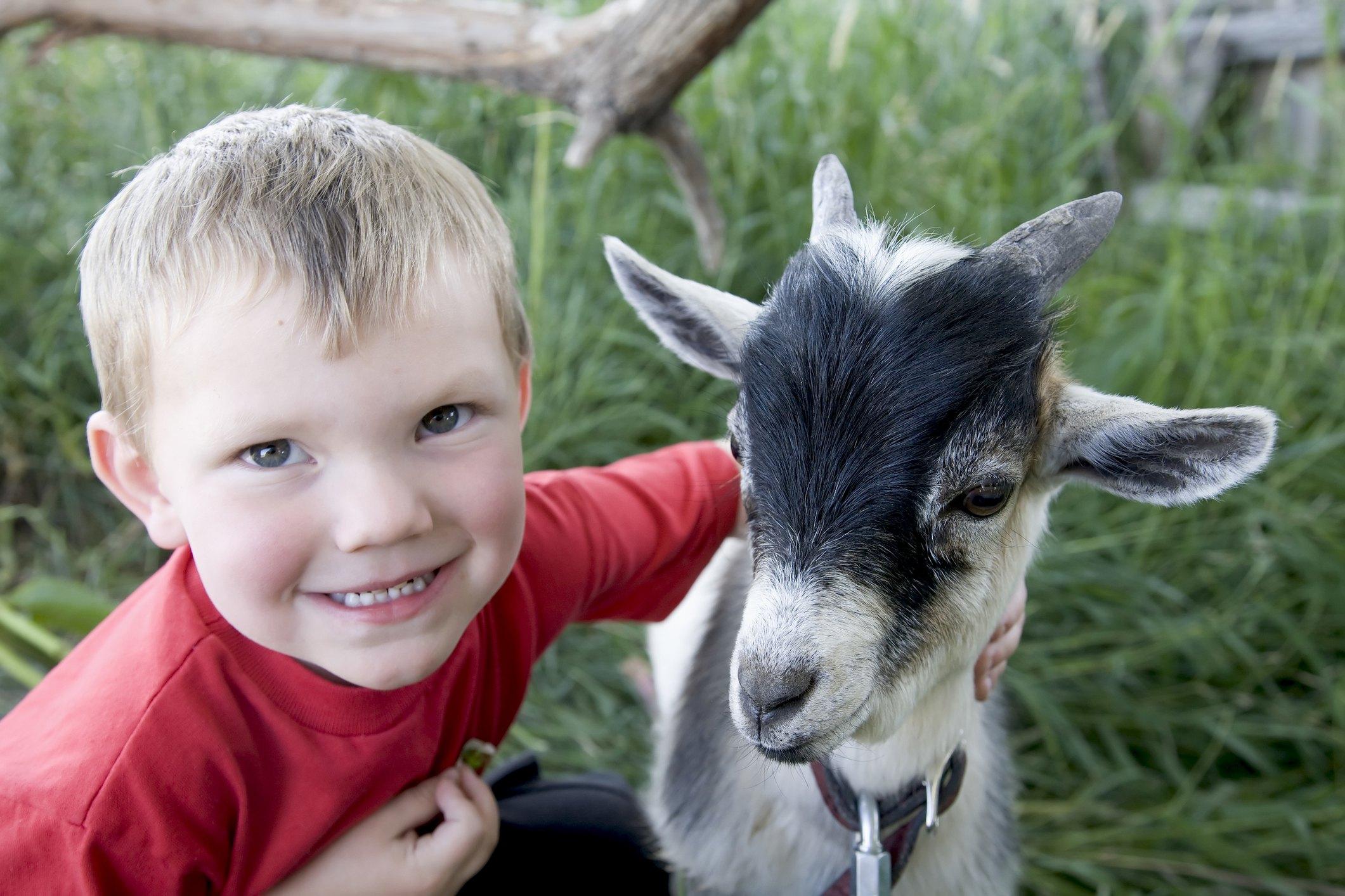 På Losby Gård får barna hilse på dyrene